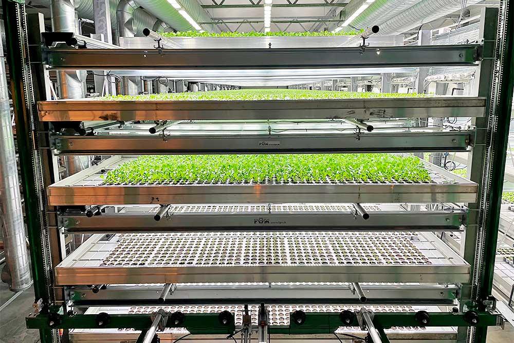 Vertical farming i multilayer rendevogne