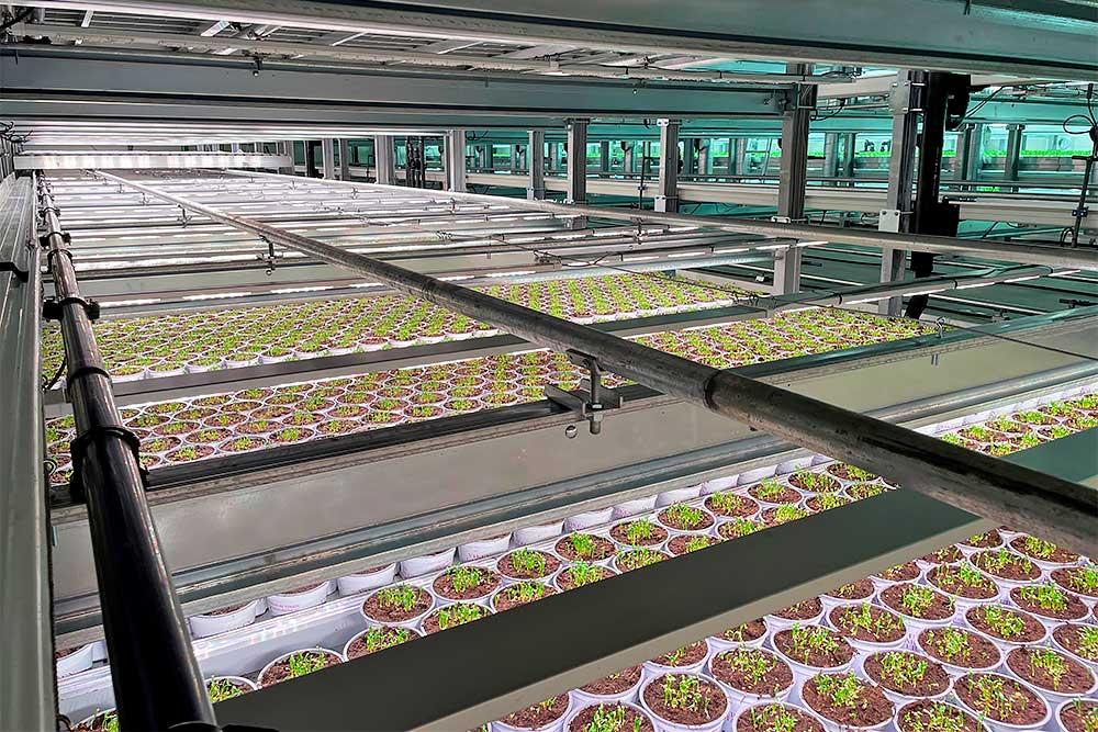 Vertical farming med planter på rendevogn