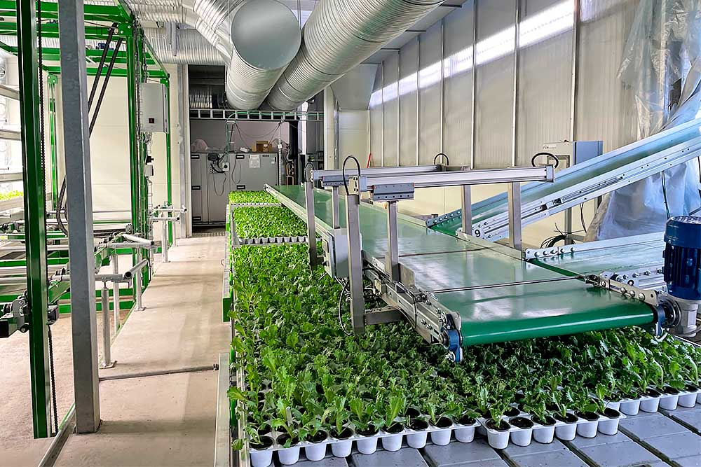 Vertical farming med transportbånd